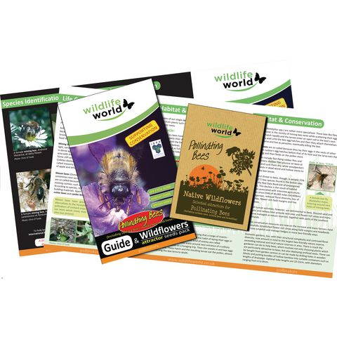 Bee Attractor Wildflower seed pack