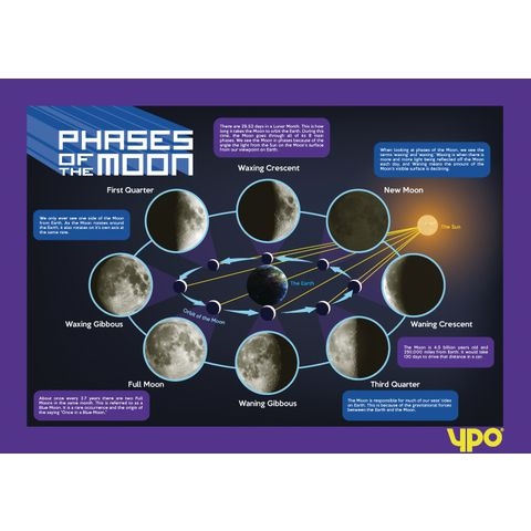 Moon's Lunar Phases
