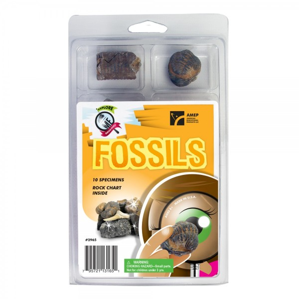 School Fossil Specimens educational supplies from teachtastic.co.uk