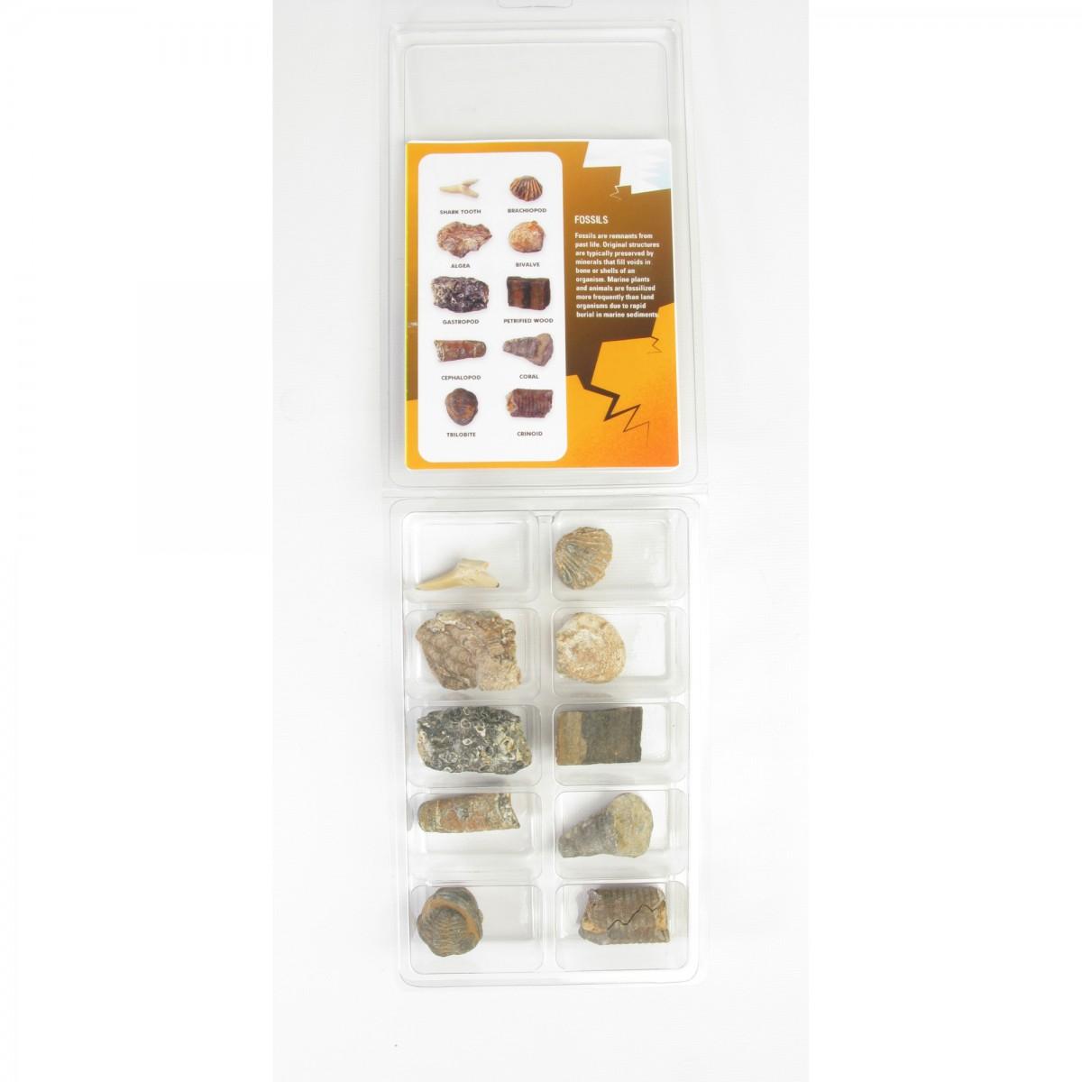 10_fossil_specimen_box