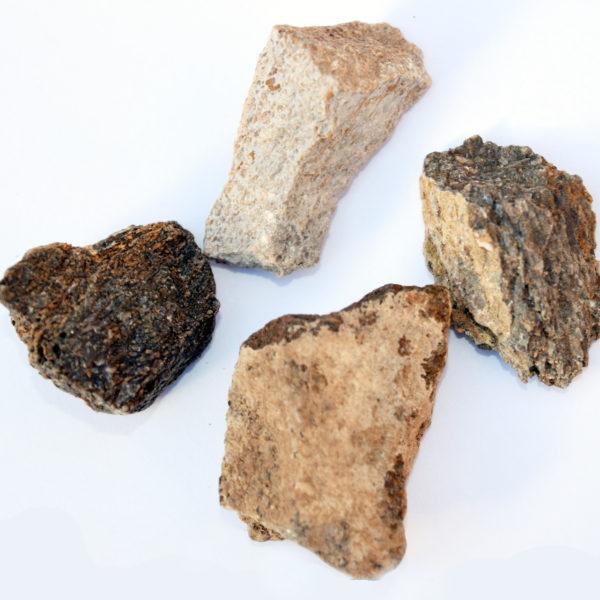 dinosaur bone fossil bags