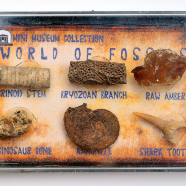 fossil box collection