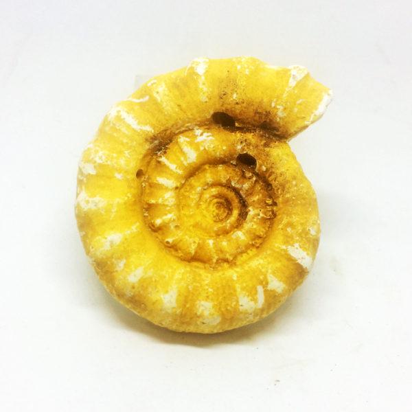 Fossil Replica Set _ammonite