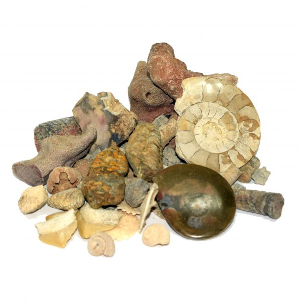 fossil_sorting_kit